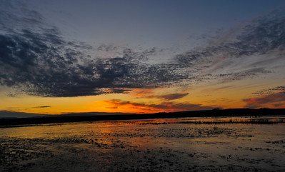 Bosque del Apache sunrise pano