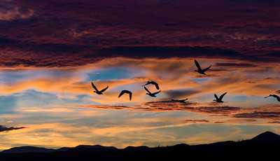 Sunset at Bosque del Apache
