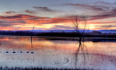 Sunrise on the Flight Deck at Bosque del Apache