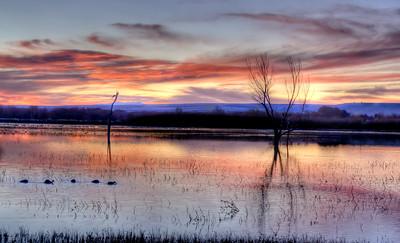 Sunrise on the Flight Deck at Bosque del Apache