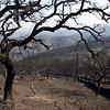 Incendio forestal de Minas de Rio Tinto y Berrocal (Huelva)
