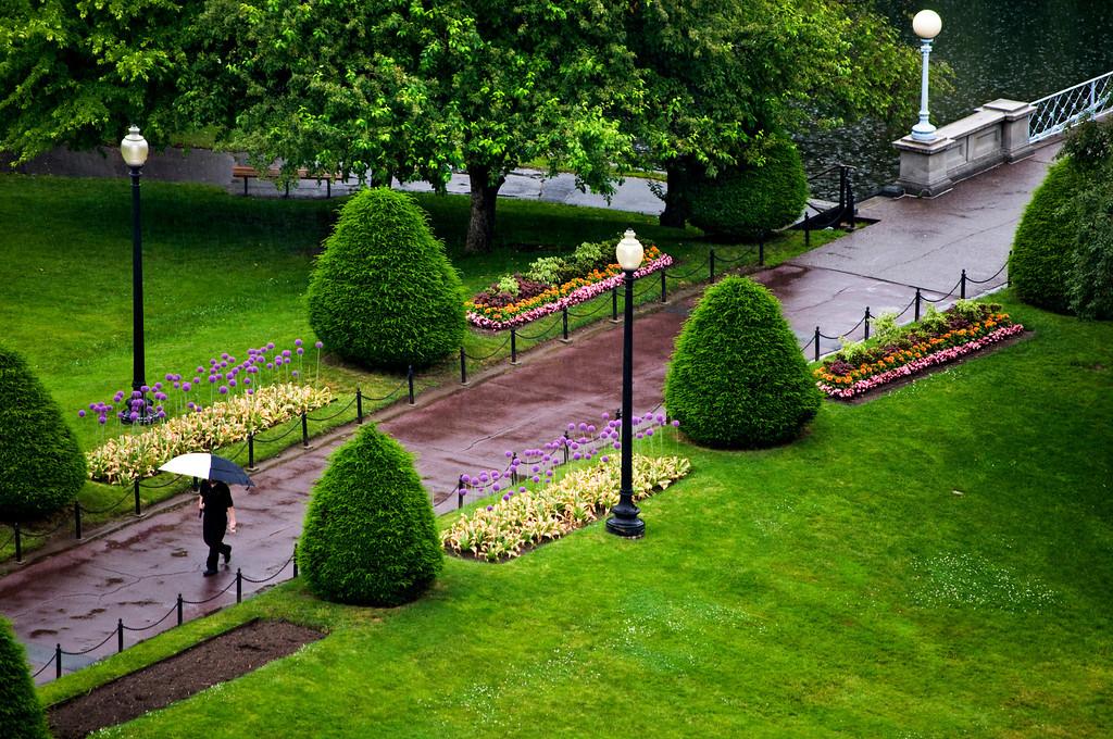 Man Walking Alone Under Rain in Boston Public Garden.