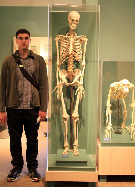Human skeleton (Graham for scale)