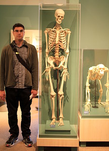 Human skeleton (Graham for scale)