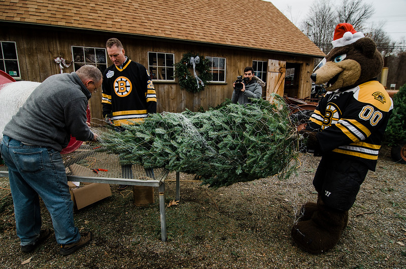 Owner Neil Zanni, former Bruins player Bob Sweeney and mascot Blades prepare a tree as the Boston Bruins Foundation was on hand to give out free Christmas trees to veterans at the Gardner's Spot in Leominster on Friday, December 8, 2017. SENTINEL & ENTERPRISE / Ashley Green