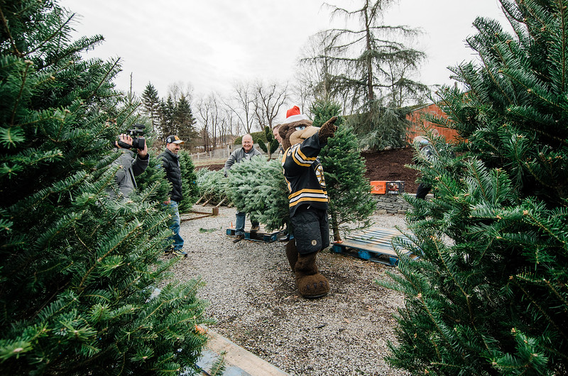Owner Neil Zanni and mascot Blades select a tree as the Boston Bruins Foundation was on hand to give out free Christmas trees to veterans at the Gardner's Spot in Leominster on Friday, December 8, 2017. SENTINEL & ENTERPRISE / Ashley Green