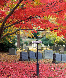 Glorious Red Maple Leaves in Mt. Auburn Cemetery, October 2009