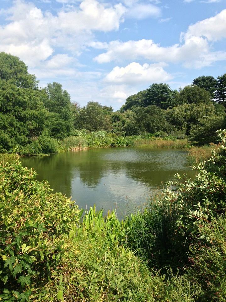 A pond in Arnold Arboretum.