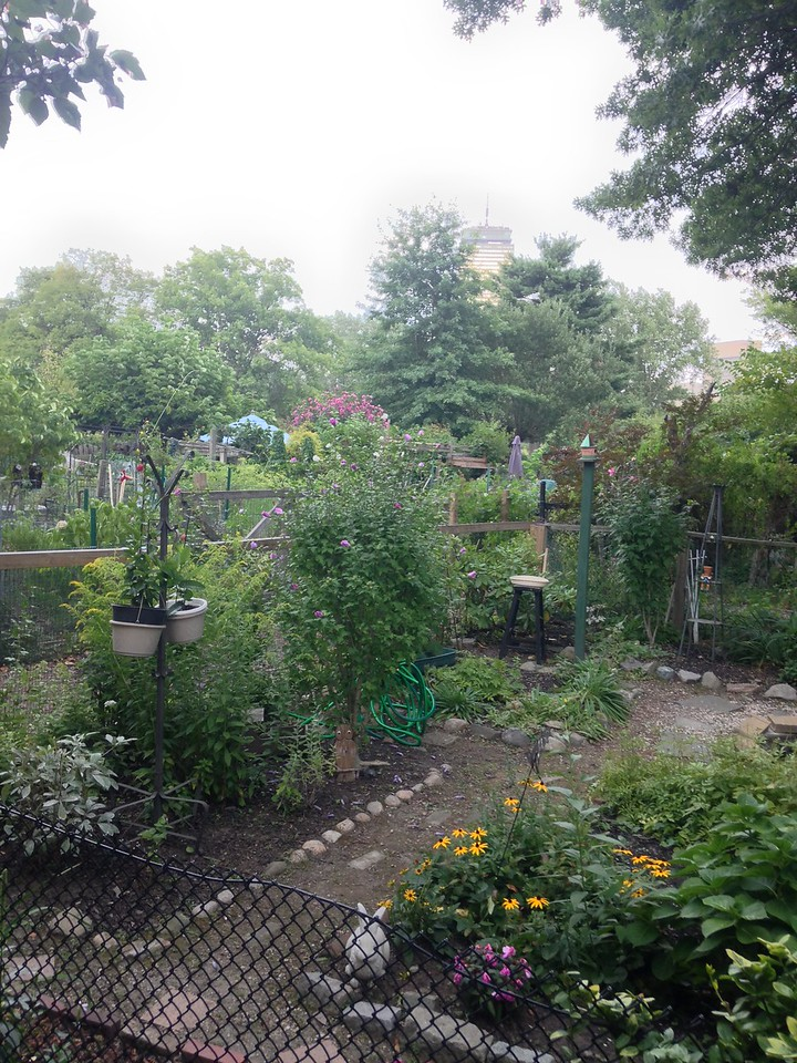 Fenway Victory Gardens in the Back Bay Fens.