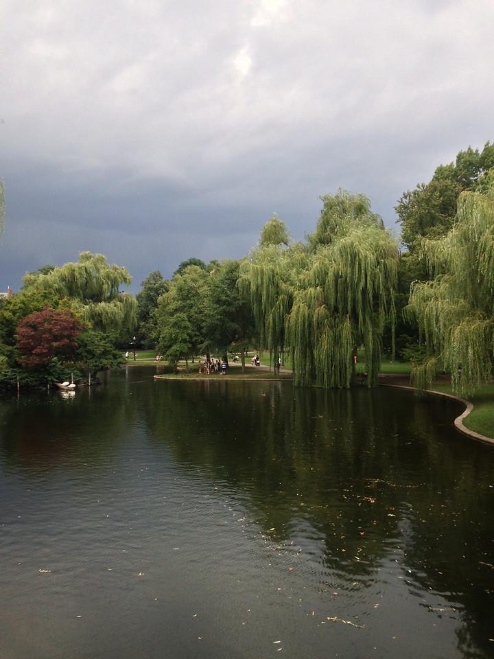 Willows around the pond in the Public Garden.