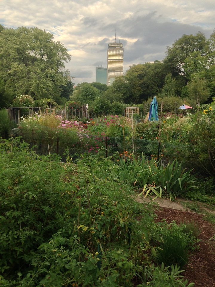 View of the Prudential Tower from Fenway Victory Gardens in the Back Bay Fens.