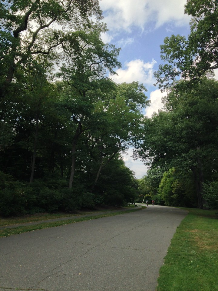 Multipurpose recreational path in Arnold Arboretum.