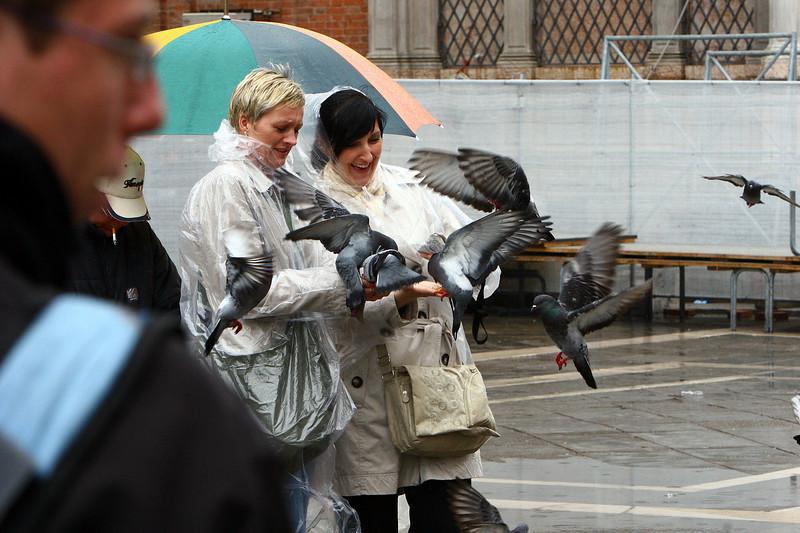 The sacred bird of Venice, they were plentiful