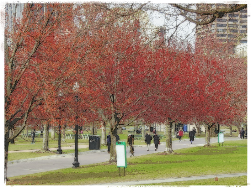 Postcard From Boston Common