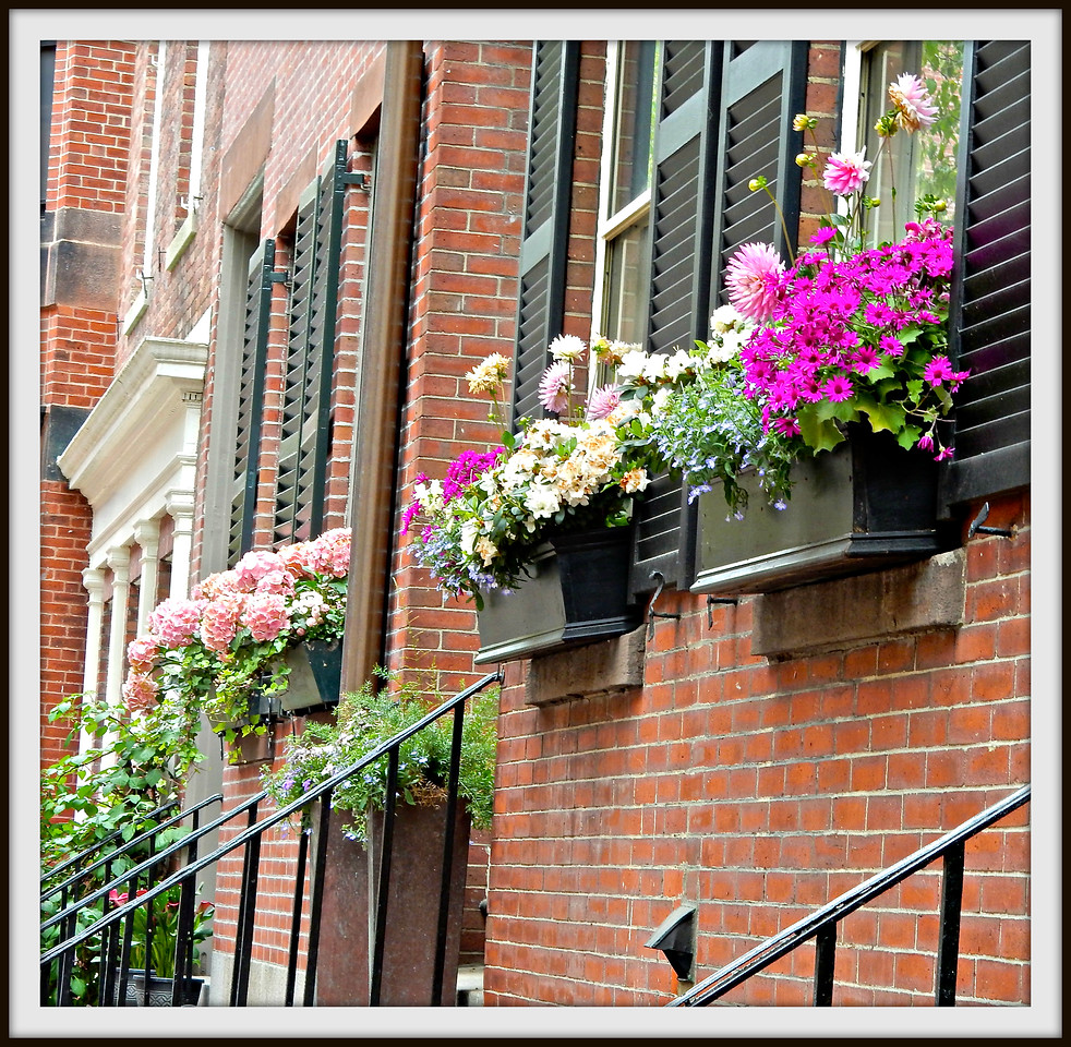 Beacon Hill Window Boxes