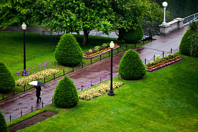 Man Walking Alone Under Rain in Boston Public Garden.