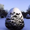 IMG_2629 - Version 22004-12-27Public Garden snow yew winter © 2011 Penny Cherubino© 2011 Penny Cherubino