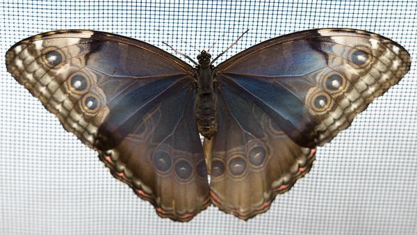 Boston Science Museum Butterflies