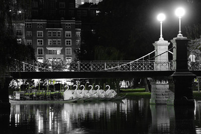 The Swans rest at Night, Boston Garden
