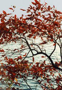 Autumn at the Arlington Reservoir