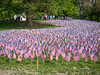 Military Heroes flag garden. 37,000 flags were planted. They were taken down late on 26 May 2014 (observed Memorial Day).
