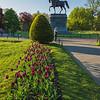 purple tulips George Washington & Rebecca