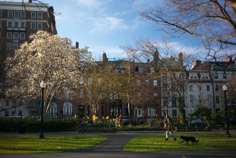 Beacon St edge of Public Garden w dog human & squirrel