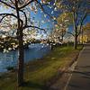 spring on the Esplanade
