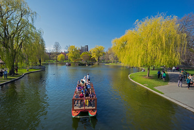 swan boat approaching bridge Public Garden