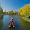 swan boat approaching bridge Public Garden