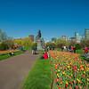 tulips & George in Public Garden