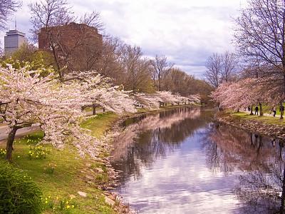 Charles River in Spring