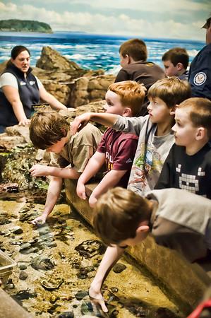 Boston Aquarium Tide Pool