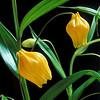 yelllow flower arrangement