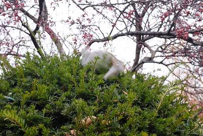 Squirrel retreat!