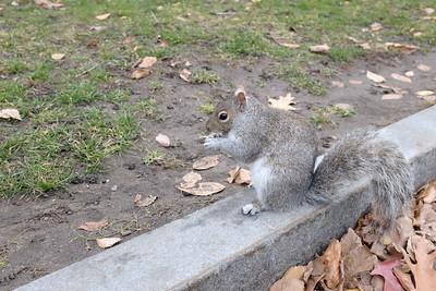 Squirrel munching