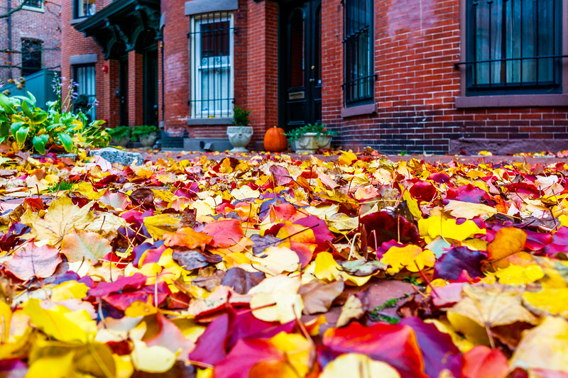 Fall Leaves in South End of Boston