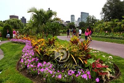 Boston's Flora