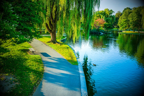 Meet me under the willow tree