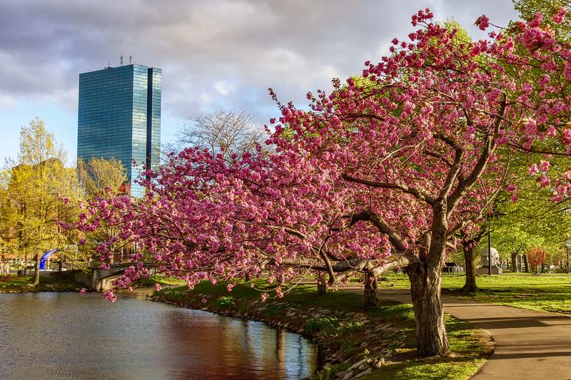 Flowers in Boston