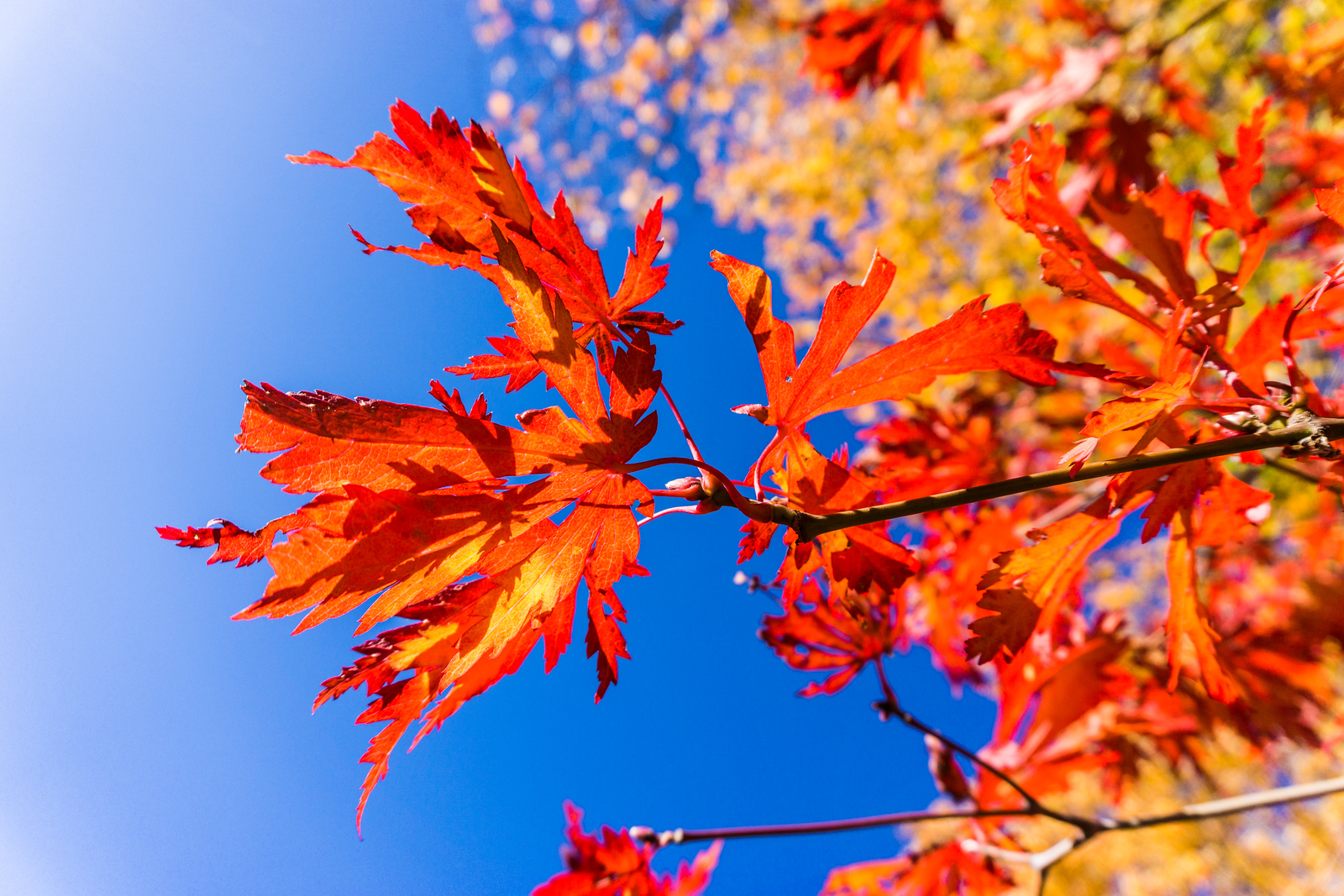 Fall Leaves and Blue Sky