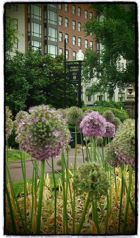 Boston Public Garden and Boston Common Print Series