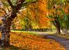 Golden Public Garden
