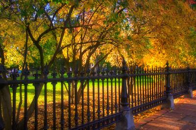 Boston Foliage - Boston Garden
