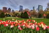 Boston Public Garden and Boston Common Print Series
