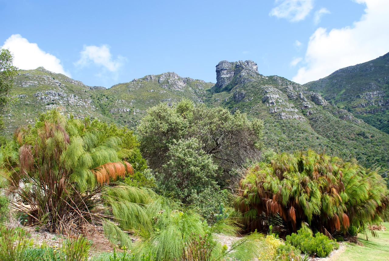 Table Mountain, Cape Town seen from Kirstenbosch Botanic Gardens