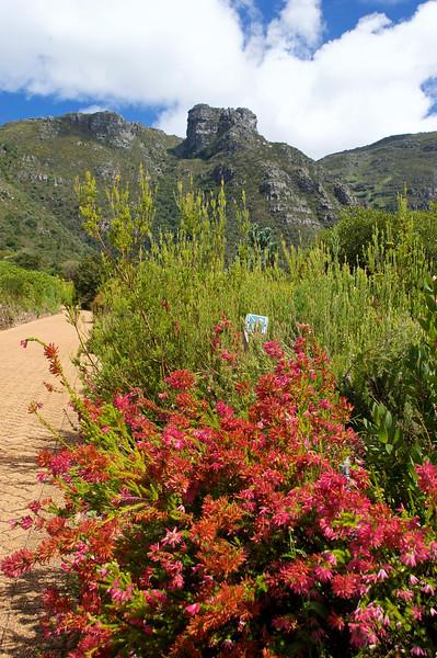 Kirstenbosch Botanic Gardens, Cape Town, South Africa