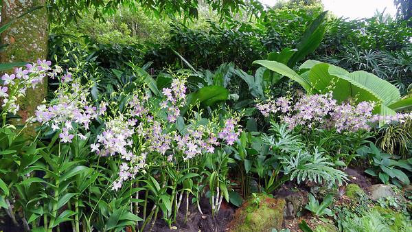 Genus Dendrobium, Orchidaceae