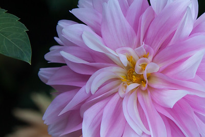 Debbie's Garden 8448