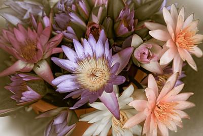 Bangkok Blooms 2305cs
